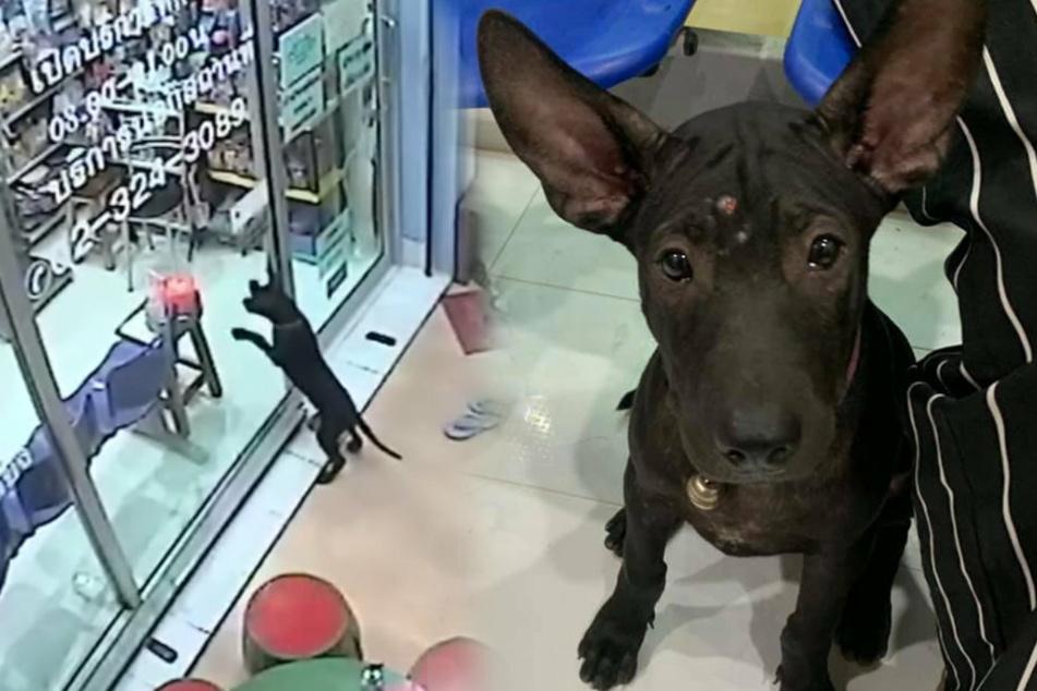 Was für ein cleveres Bürschchen! Der Hund sorgte bei seiner Tierklinik für verwunderte Blicke.