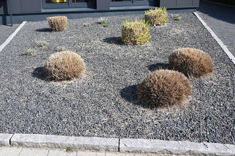 Statt Blumen oder Rasen zieren Kies oder andere Steine Schottergärten. (Symbolbild)