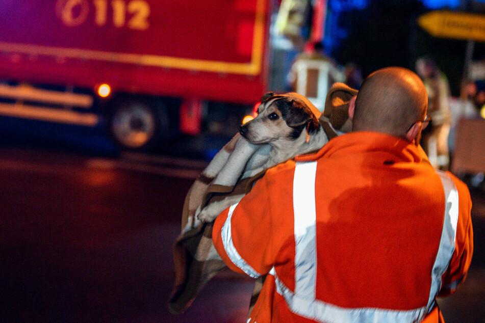 Der Hund des Mannes wurde gerettet und im Anschluss in eine Tierklinik gebracht.