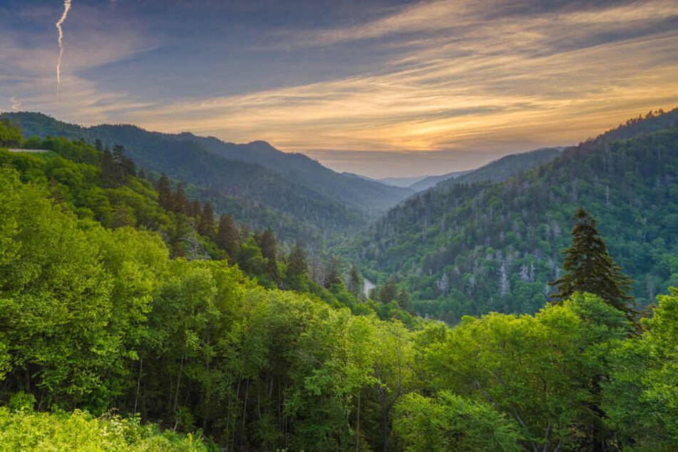 Bis zu 80 Millionen Euro sollen in die Wälder investiert werden. (Symbolbild)