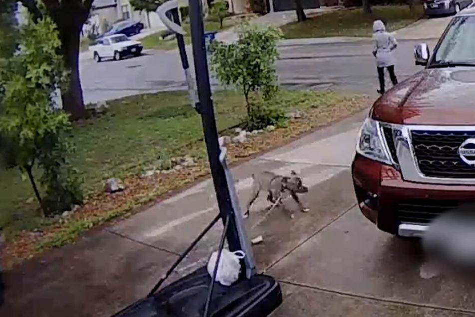 Hier versucht der Hund seiner Besitzerin hinterherzurennen.