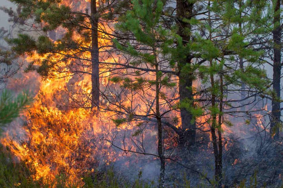 Ein Feuer im Wald verbreitet sich in Sekundenschnelle. (Symbolbild)