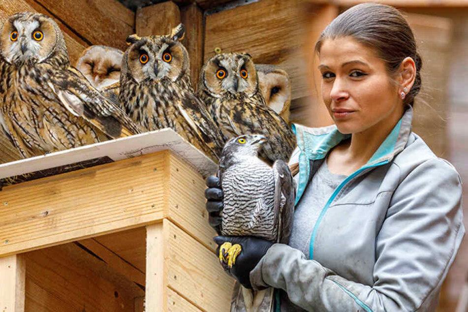 Vogelgrippe in Dresden: Wann dürfen die Tiere endlich wieder ins Freie?