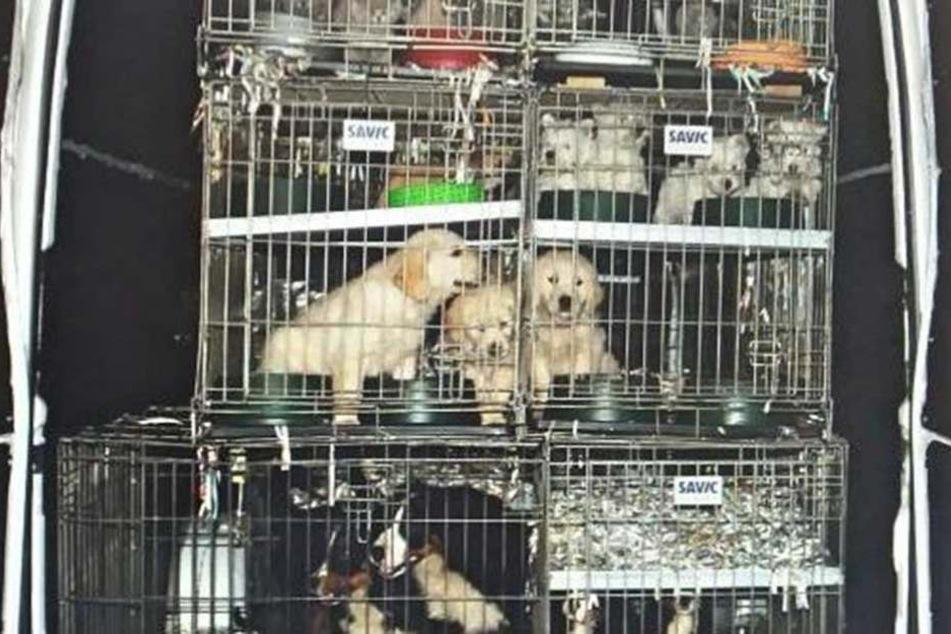 Illegaler Handel im Internet: So erkennt ihr die Tierquäler-Mafia