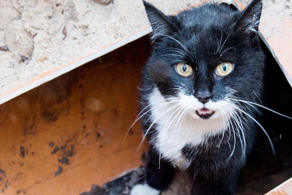 Eine Katze hat einen größeren Feuerwehreinsatz verursacht. (Symbolbild)