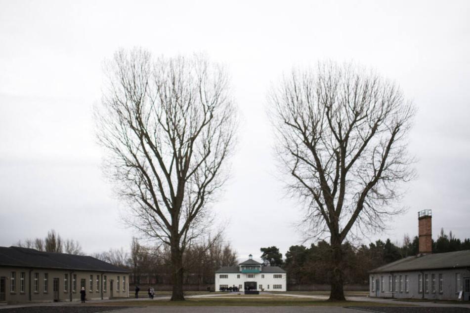 Bäume und Baracken stehen auf dem Gelände der Gedenkstätte Sachsenhausen. (Archivbild)
