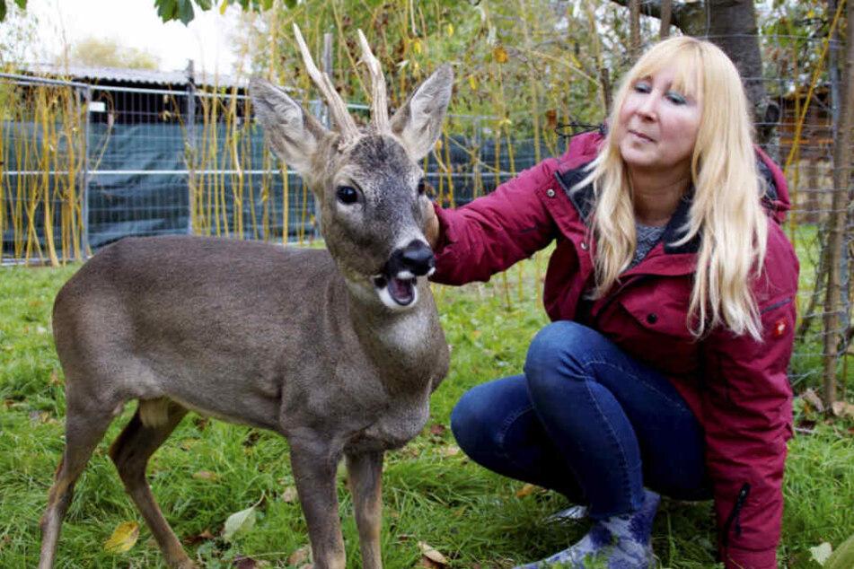 Wieder zurück: Anja Pahlen streichelt den ausgewachsenen Bock.