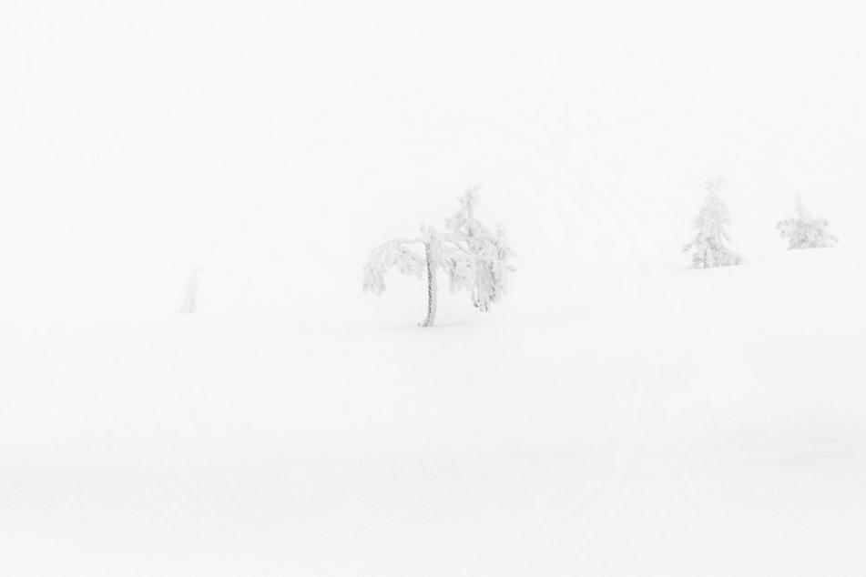 """Das Nominee-Foto aus der """"Whiteout""""-Serie."""