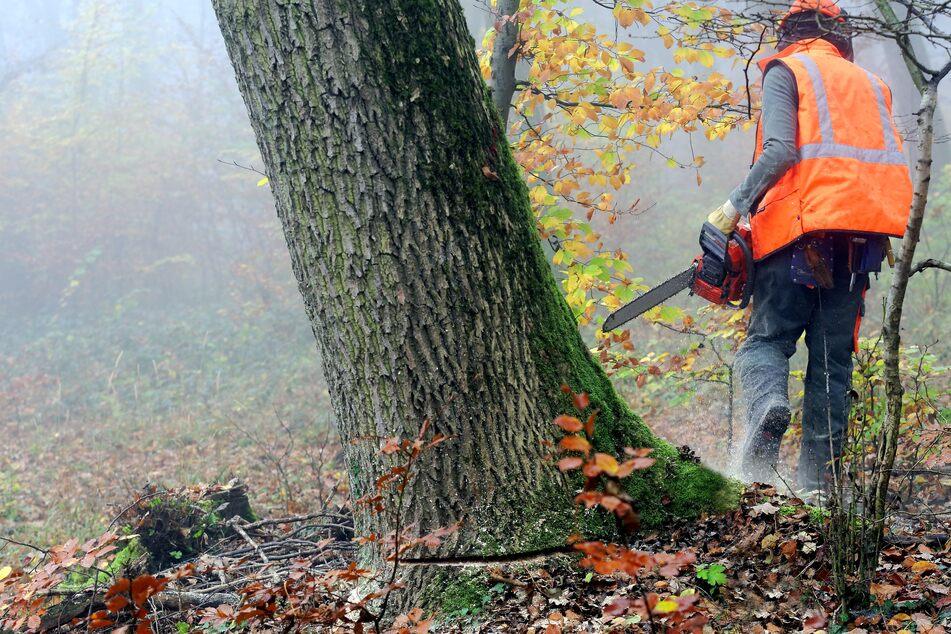 Der umstürzende Baum traf den 54-Jährigen mit voller Wucht, sodass er noch an der Unfallstelle verstarb (Symbolfoto).
