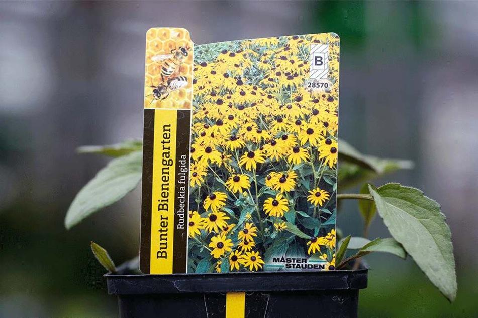 In Gärtnereien werden bienenfreundliche Pflanzen inzwischen oft extra gekennzeichnet.