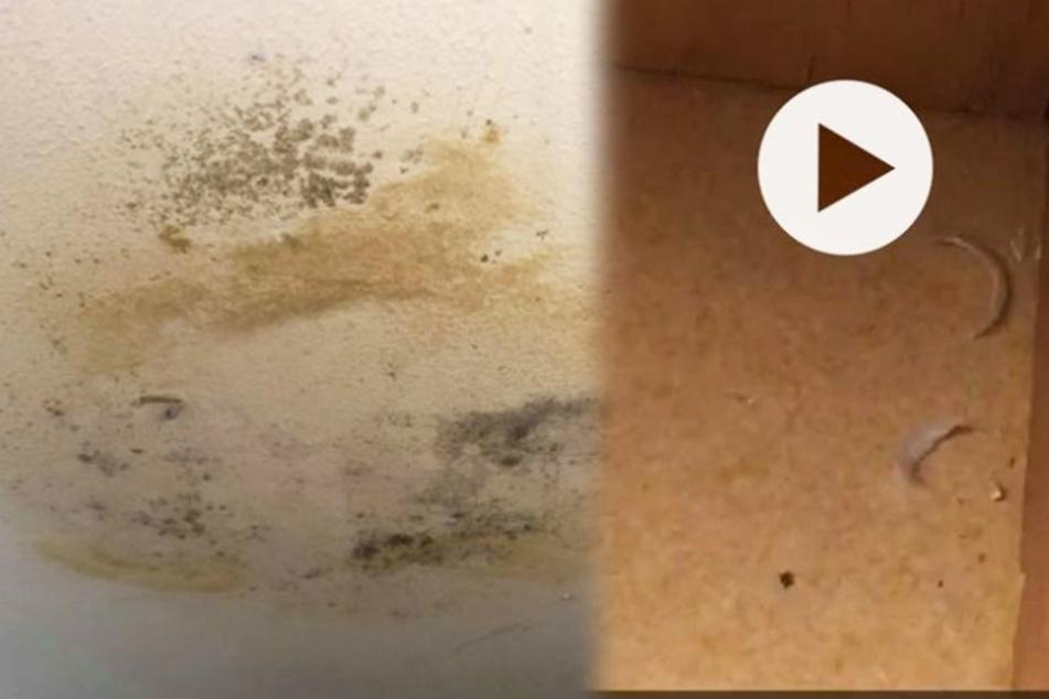 An den Wänden schimmelt es, in den Schränken lagen abgerissene Fußnägel.