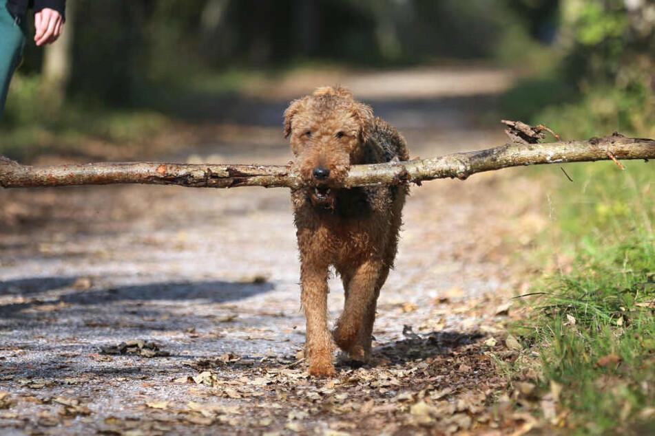 Ein herrenloser Hund hat die Polizei auf einen vermuteten Einbruch aufmerksam gemacht.