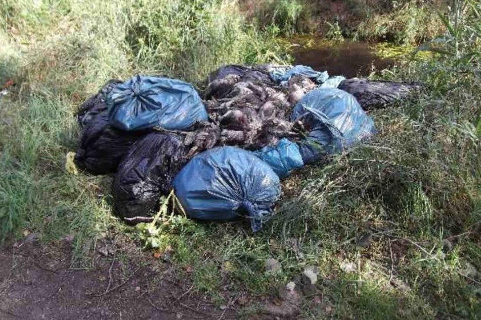 Mehrere Müllsäcke mit toten Hühnern wurden an einem Graben gefunden.