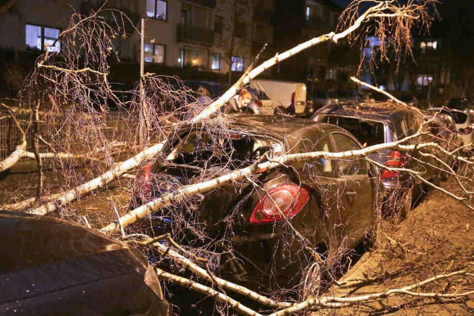Ein geparktes Auto ist in Düsseldorf von einem umgestürzten Baum bedeckt.
