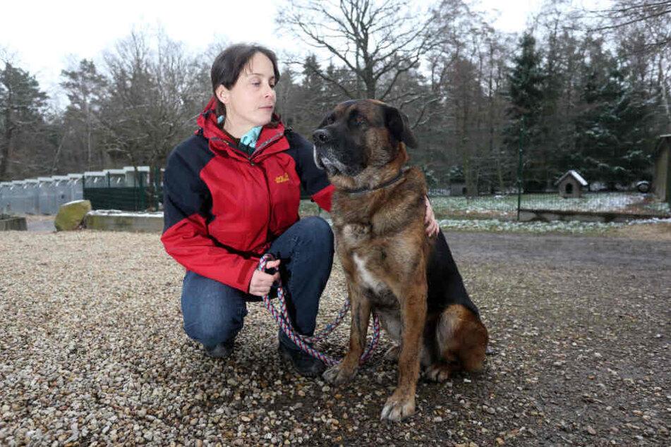 Wer einen Hund im Tierheim Vielau  abgeben will, bezahlt normalerweise 141 Euro.