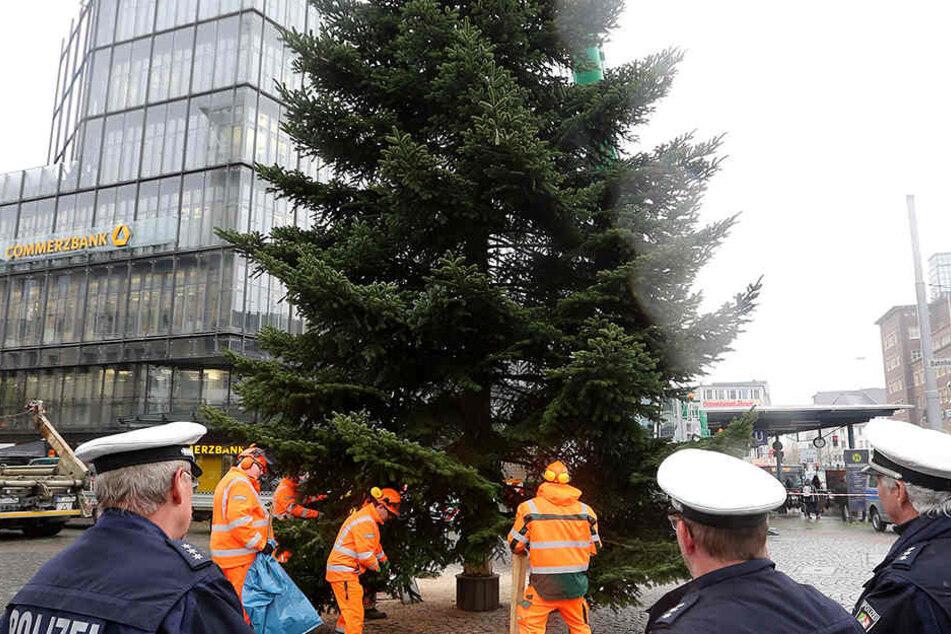 Bielefeld sucht schon nach dem perfekten Weihnachtsbaum
