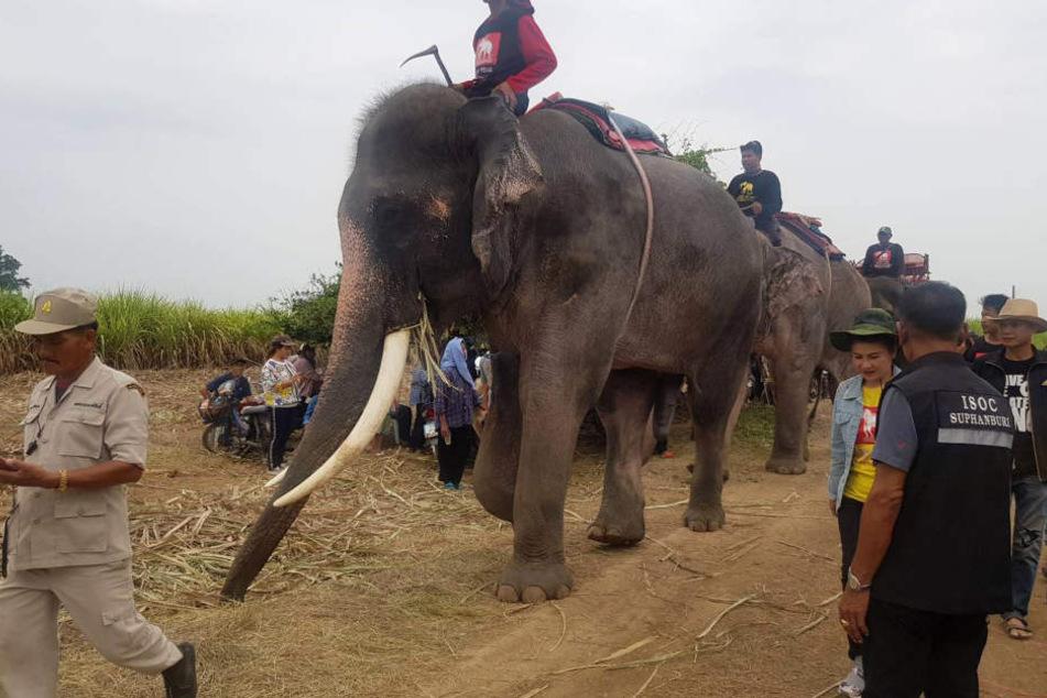 Elefanten helfen bei Suche nach vermisstem Kind
