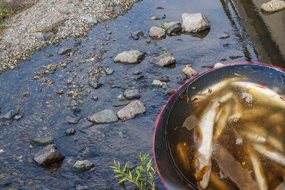 Rätselhaftes Fischsterben: Tote Tiere in sächsischem Bach entdeckt