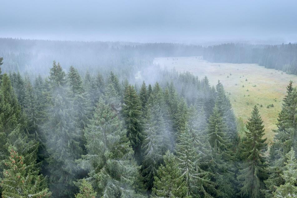 Über dem Wolfsgebiet bei Kühnhaide liegt morgens bereits herbstlicher Nebel.