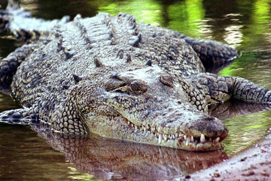 Ein Krokodil fraß den britischen Wirtschafts-Journalisten Paul McClean auf.