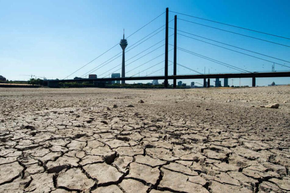 Wegen der Dürre ist das Flussbett des Rheins bei Düsseldorf teilweise trockengefallen und ausgetrocknet.