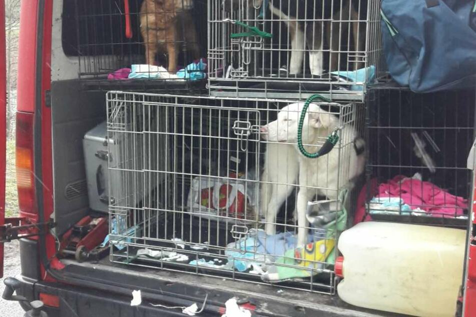Die vier Hunde waren schlecht gepflegt in Boxen eingesperrt.