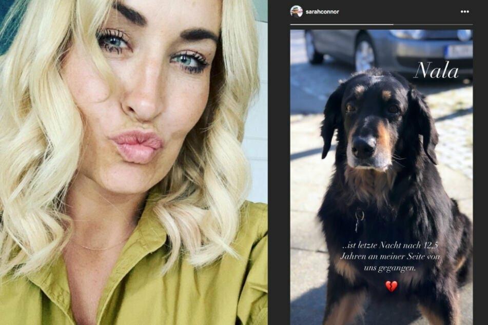 Vor rund einem Jahr nahm Sarah Abschied von ihrem Hund Nala.