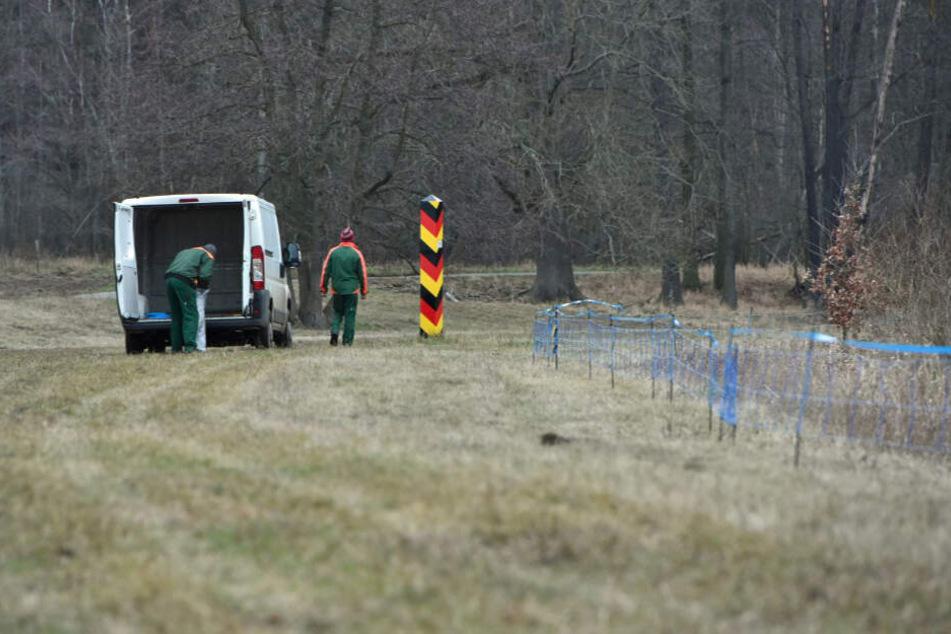 Arbeiter errichten entlang der deutsch-polnischen Grenze einen Schutzaun.