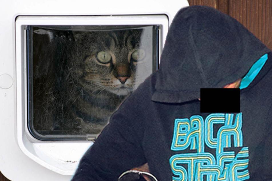 Dieser Einbrecher kam durch die Katzenklappe!