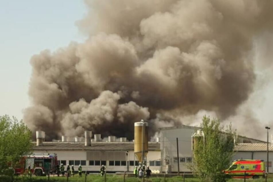 Nach dem Großbrand in einer Mastanlage am Sonntag soll am Dienstag mit der Ursachenermittlung begonnen werden.