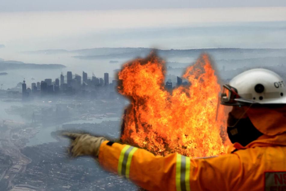 Sydney versinkt im Rauch: Buschfeuer in Australien immer bedrohlicher!