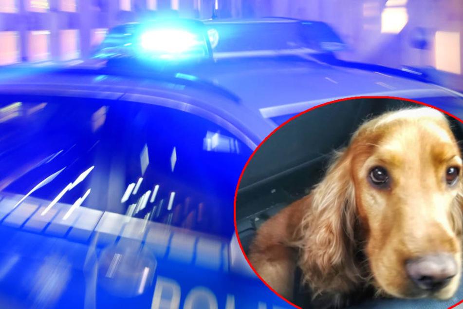 Bruno konnte von der Polizei gerettet werden.