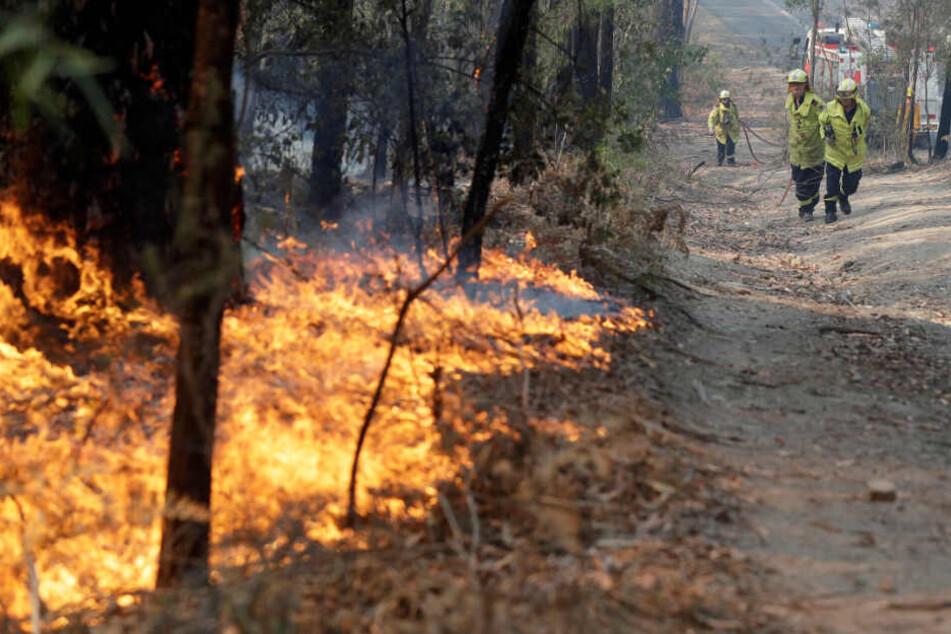 Einsatzkräfte der Feuerwehr tragen einen Schlauch, um ein Feuer in einem Wald zu bekämpfen.