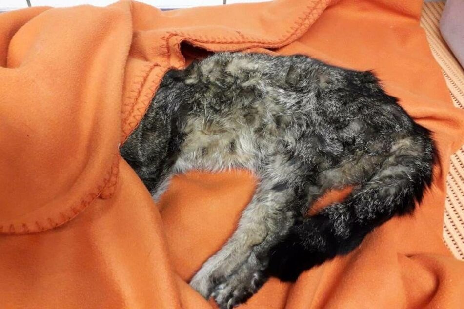 Die Katze war in der Tasche in eine orangene Decke gewickelt.