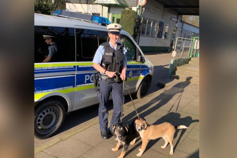 Die Bundespolizei nahm die Hunde entgegen.