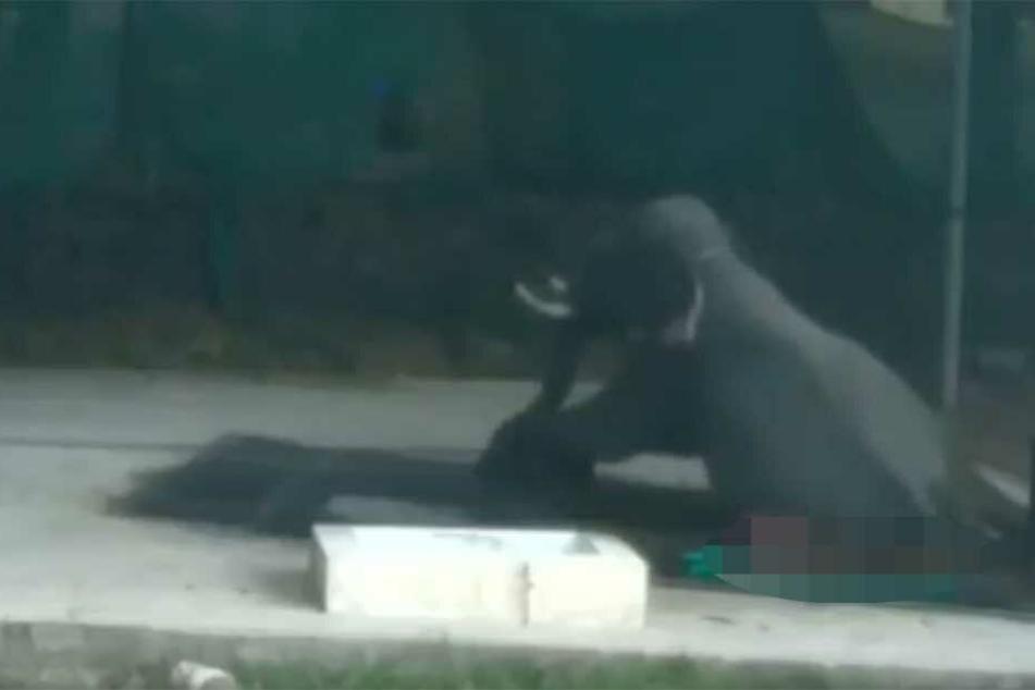 Der Elefant sitzt auf seinem Pfleger, der hatte keine Überlebenschance.