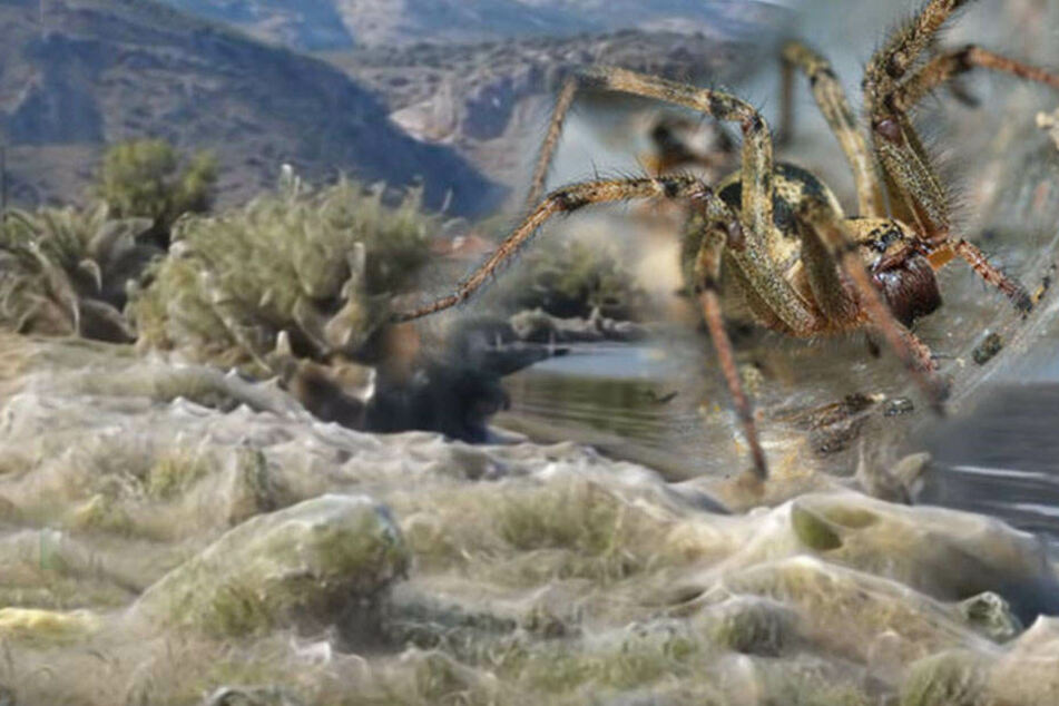 Massen-Sex im Urlaubsparadies: Gigantisches Spinnennetz schockt Bewohner!