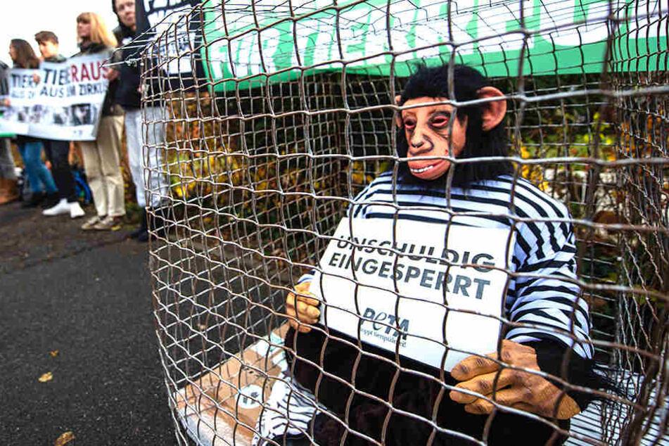 Ein Tierschützer sitzt im Affenkostüm in einem Käfig und demonstriert gegen die Haltung von Tieren im Zirkus.