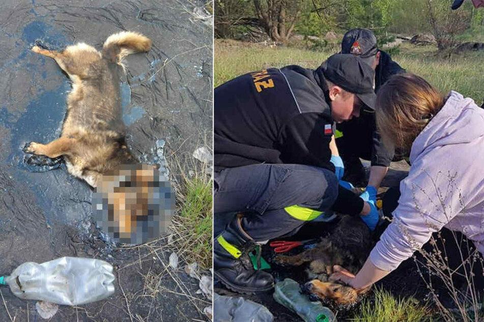 Der Hund konnte nur noch seinen Kopf bewegen. Die Helfer befreiten ihn vorsichtig.
