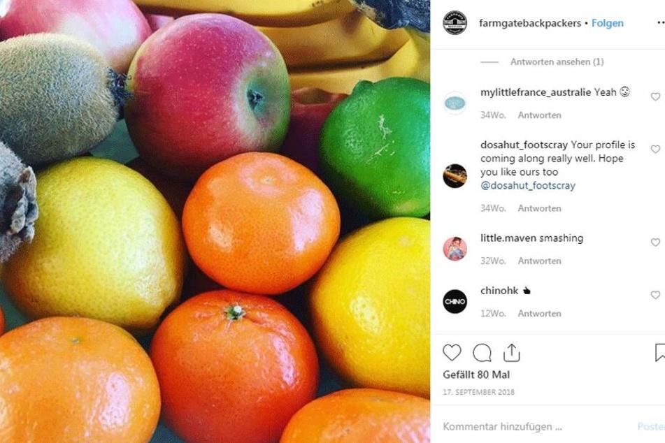 Trügt der schöne Schein? So sieht der bislang letzte Eintrag von Farmgate Backpackers auf Instagram aus.