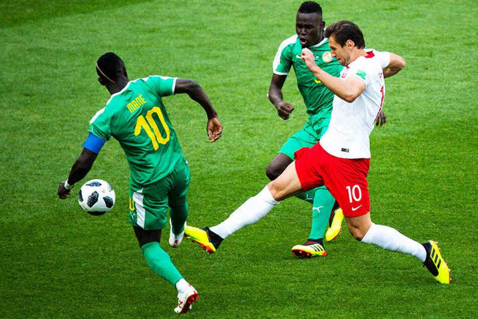 Polens Grzegorz Krychowiak kämpft mit Senegals Kapitän Sadio Mane (l.) und dem früheren Hannover-96-Stürmer Mame Biram Diouf (hinten) um den Ball.