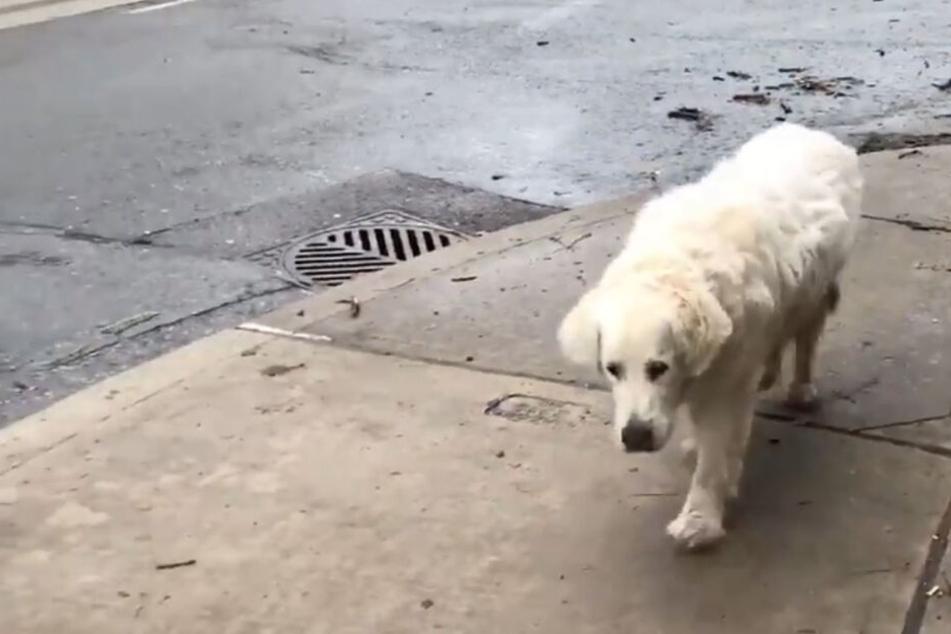 Hund macht seinen letzten Spaziergang, dann stirbt er