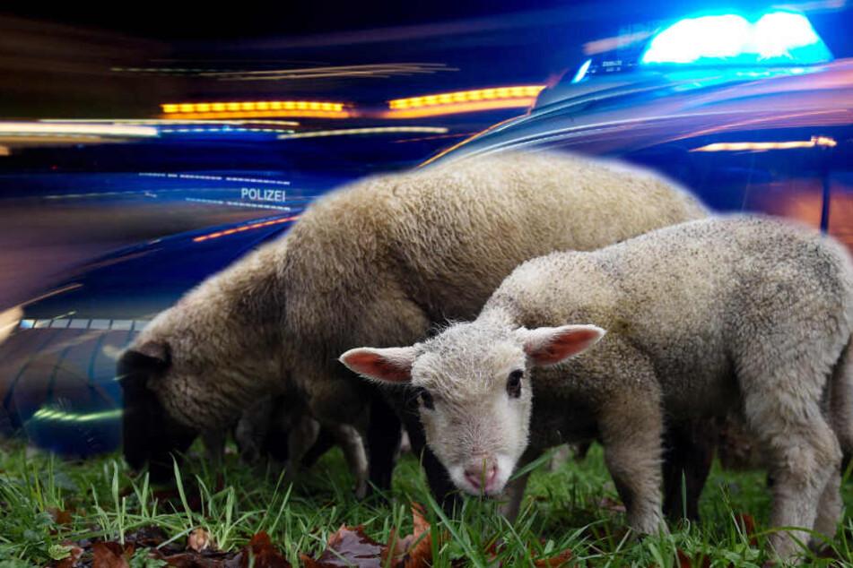 Mitten in der Nacht: Tierisches Duo sorgt für Polizeieinsatz