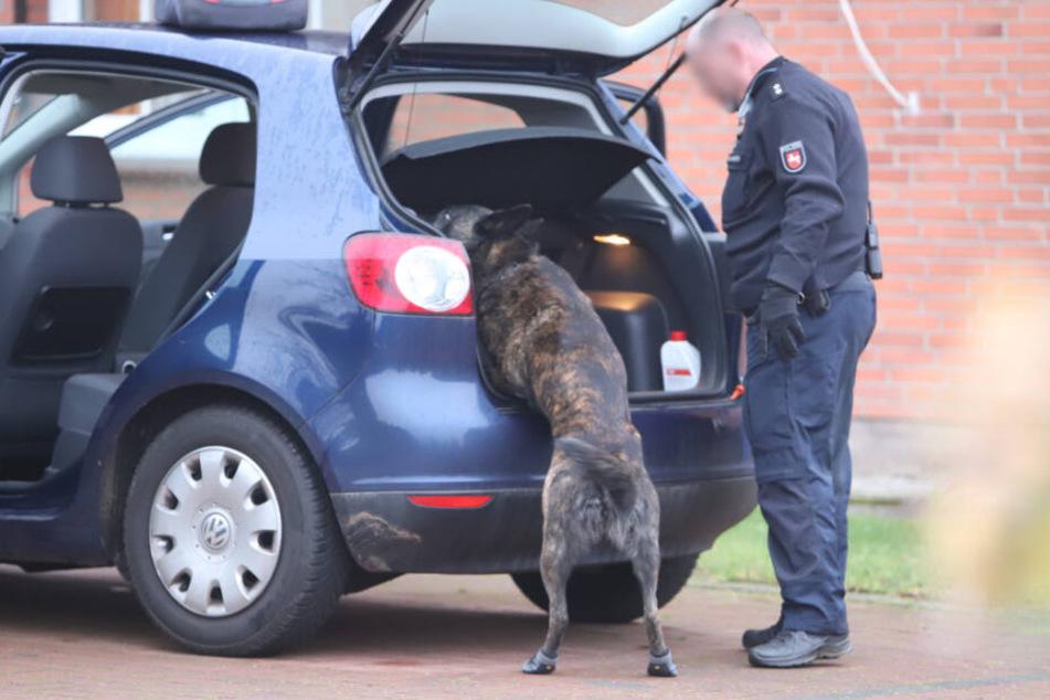 Ein Polizeihund schnüffelt im Kofferraum eines Autos.