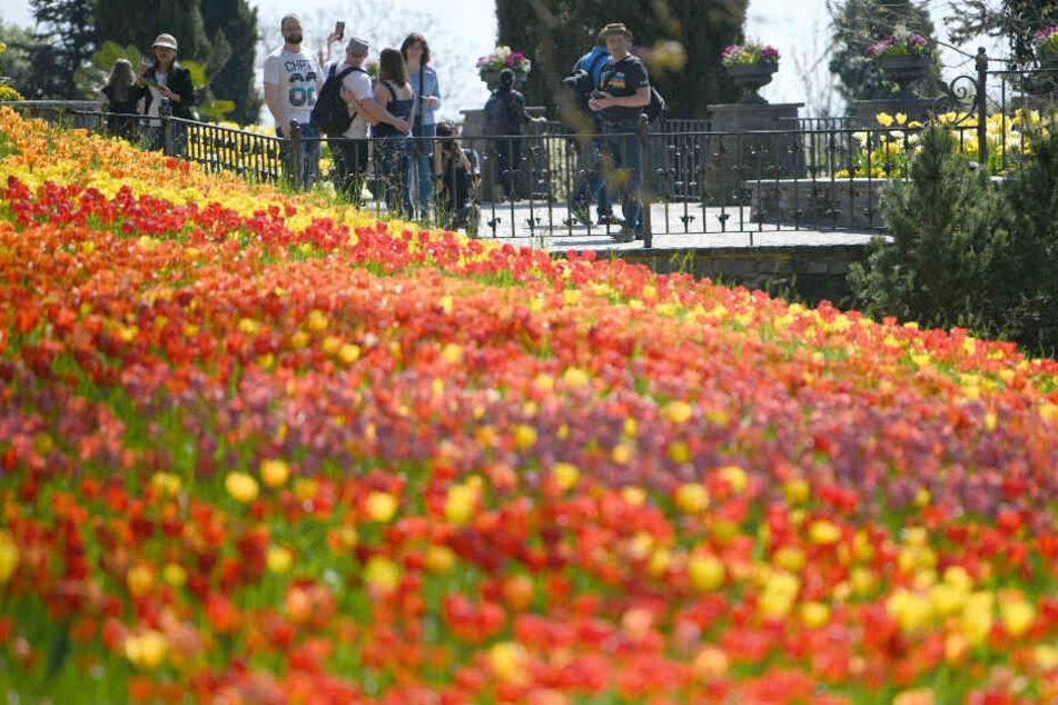 Die Mainau ist für ihre Blumenpracht bekannt.