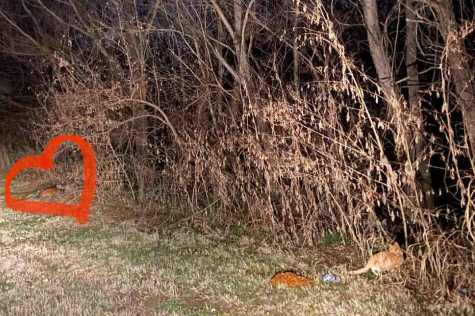 Klare Prioritäten: Um den, auf diesem Bild kaum sichtbaren Hund, machte Marissa Belle ein Herz. Die Katze bekam keines...