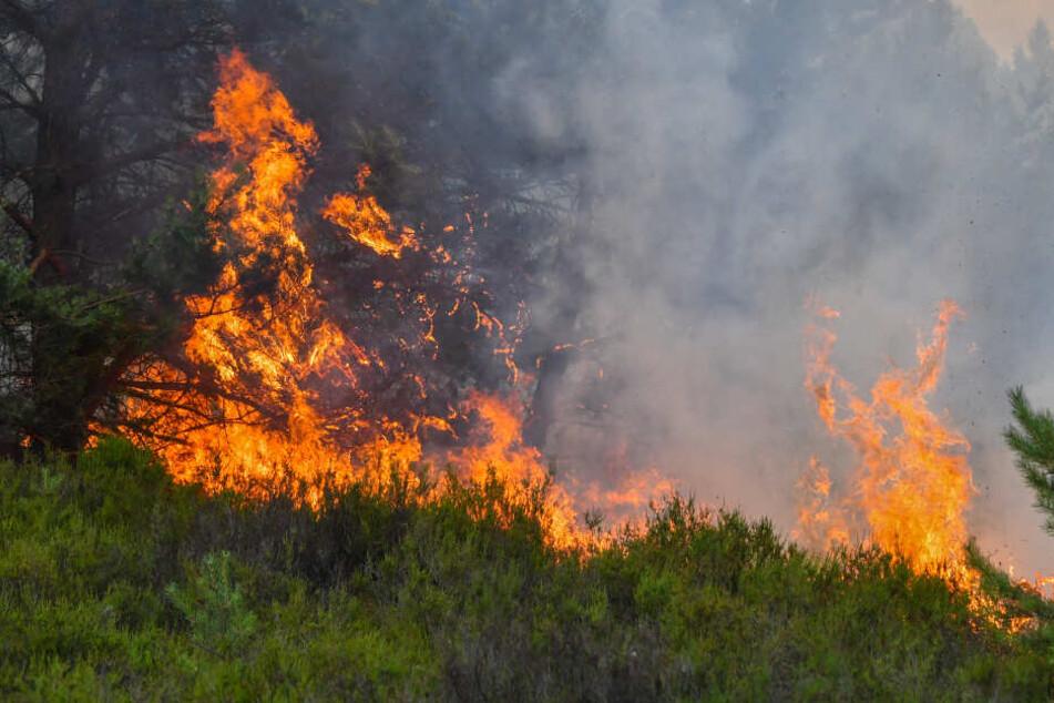 In Nordsachsen gilt die höchste Warnstufe für Waldbrände. (Symbolbild)