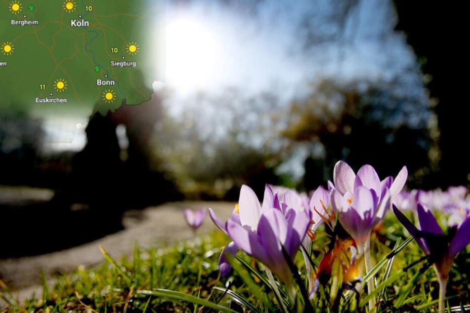 Pünktlich zum Wochenende lugt der Frühling um die Ecke.