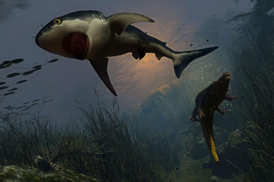 Alligatoren sind eine der ersten großen Gefahren, die im Wasser auf den Baby-Bullenhai warten.