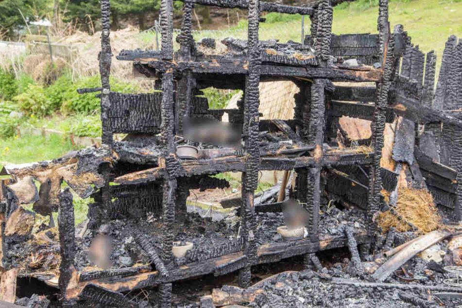 25 Hasen starben bei dem verheerenden Brand.